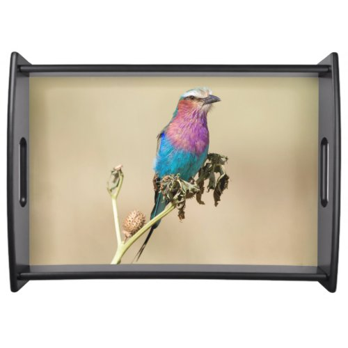 Lilac breasted Roller Serving Tray