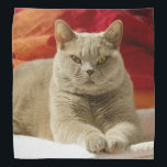 """Lilac british shorthair cat bandana<br><div class=""""desc"""">Lilac british shorthair cat wih yellow eyes lying on the ground in the bedroom</div>"""