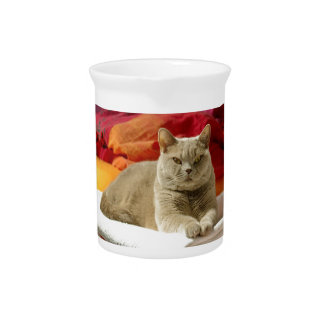 Lilac british shorthair cat beverage pitcher