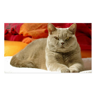 Lilac british shorthair cat business card