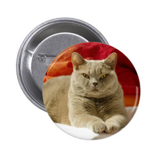 Lilac british shorthair cat button