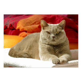 Lilac british shorthair cat large business card