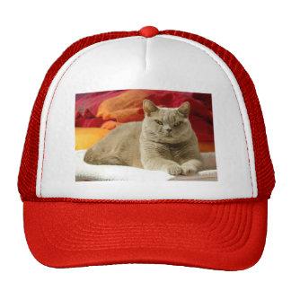 Lilac british shorthair cat trucker hat