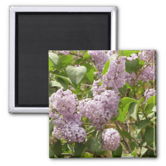 Lilac Bush Beautiful Purple Spring Flowers 2 Inch Square Magnet