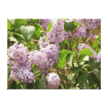 Lilac Bush Beautiful Purple Spring Flowers Canvas Print