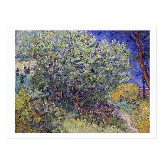 Lilac Bush by Vincent van Gogh Postcard