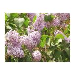 Lilac Bush Canvas Print