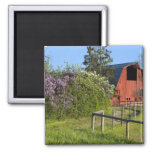 Lilac bushes in bloom and magpies in the trees 2 inch square magnet