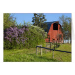 Lilac bushes in bloom and magpies in the trees greeting card