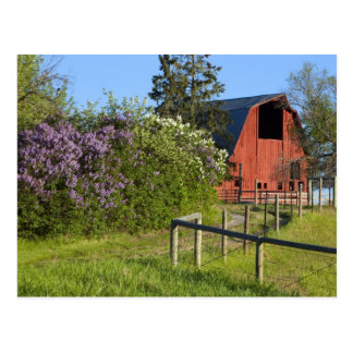 Lilac bushes in bloom and magpies in the trees postcard