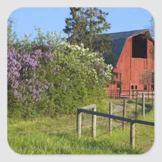 Lilac bushes in bloom and magpies in the trees square sticker