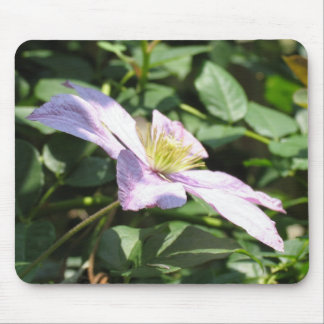 Lilac Clematis Mouse Pad
