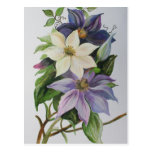 Lilac Clematis Post Cards