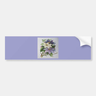 Lilac Clematis (Square) Bumper Stickers
