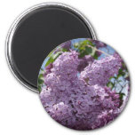 Lilac cluster magnets
