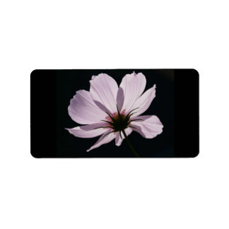 Lilac Cosmea Flower Labels