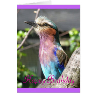 Lilac crested roller, Happy Birthday Card
