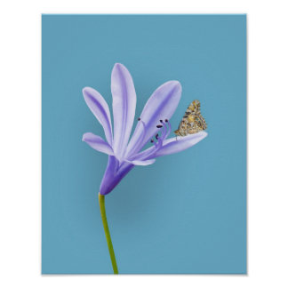 Lilac Day Lily Flower and Butterfly Poster