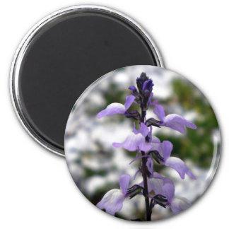 Lilac Dreams Magnet