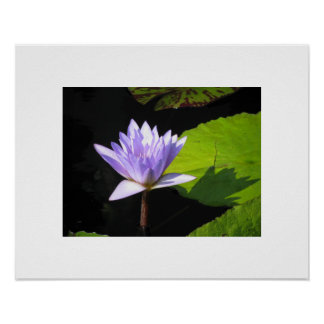 Lilac Flower at Longwood Gardens Poster