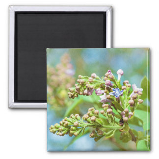 Lilac Flower - Primus Inter Pares 2 Inch Square Magnet