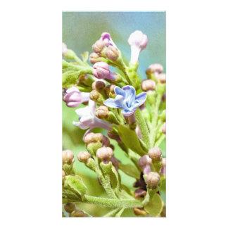 Lilac Flower - Primus Inter Pares Card