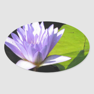 Lilac Flower with Lili Pads at Longwood Gardens Oval Sticker