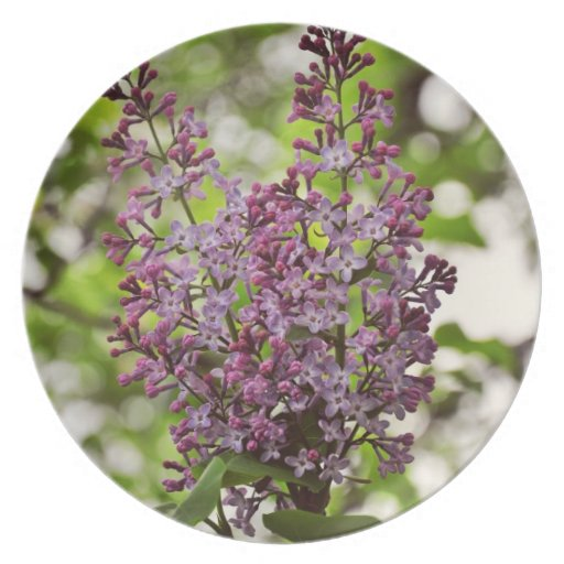 Lilac flowers dinner plates