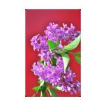 Lilac flowers gallery wrap canvas