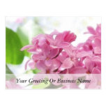 Lilac Flowers In The Morning Sunlight Postcard