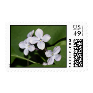 Lilac Flowers Postage