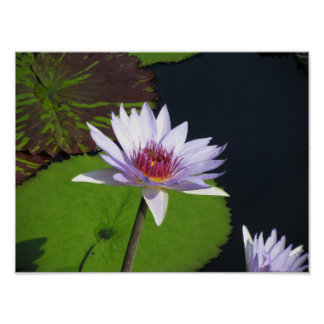 Lilac Flowers with Lily Pads Longwood Gardens Poster