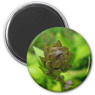 Lilac Hosta Bloom Magnet