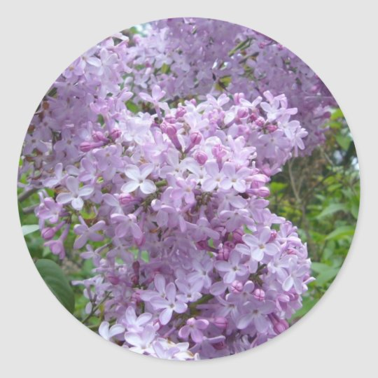 Lilac in Bloom Classic Round Sticker