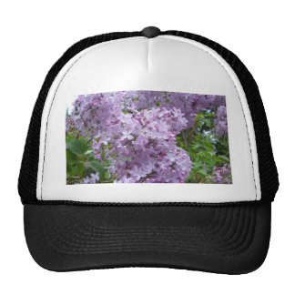 Lilac in Bloom Hats