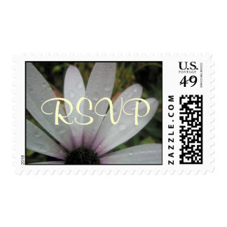 Lilac Lights wedding daisy Postage Stamps