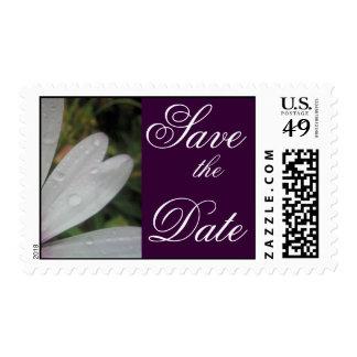Lilac Lights wedding daisy Postage Stamp
