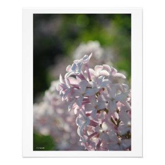 Lilac Macro Wall Decor Photo Print Photo