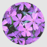 Lilac Phlox Classic Round Sticker