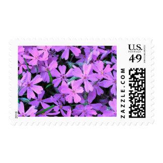 Lilac Phlox Postage