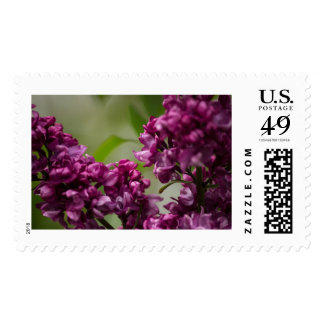 Lilac Stamps