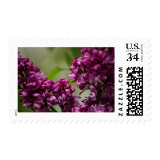 Lilac Stamp