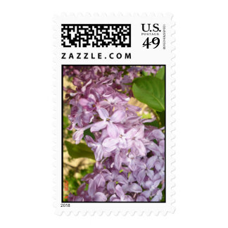 Lilac Postage Stamp