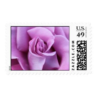 Lilac Rose Postage Stamp