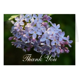 """""""Lilac Shimmering"""" Photography Thank You Greeting Card"""