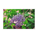 Lilac Stretched Canvas Print
