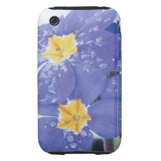 Lilac Winter Flowering Pansy Tough iPhone 3 Cover