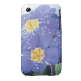 Lilac Winter Flowering Pansy iPhone 3 Cover
