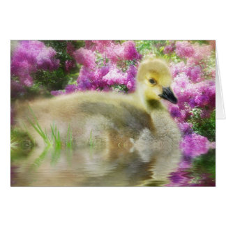 Lilacs and Gosling Card