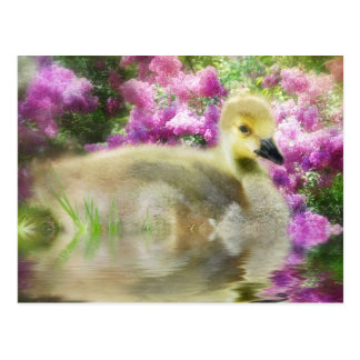 Lilacs and Gosling Postcard